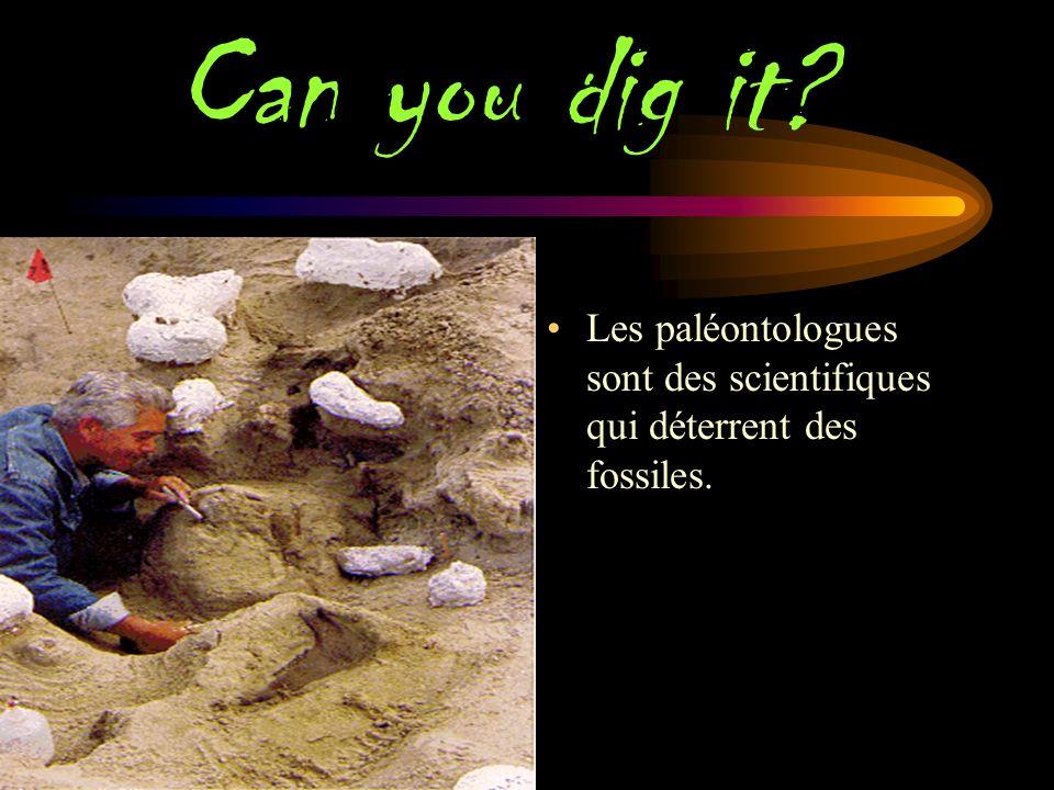 Eggs for breakfast ? Ces œufs de dinosaures ont été en quelque sorte enterré sous des tonnes de sable et de terre et transformé en fossile.