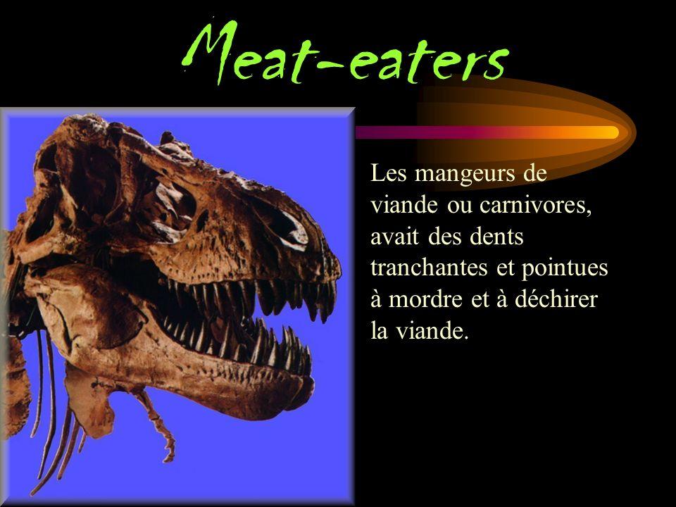 & petits Les scientifiques croient que les dinosaures ont vécu sur la terre plus de 215 millions d années.