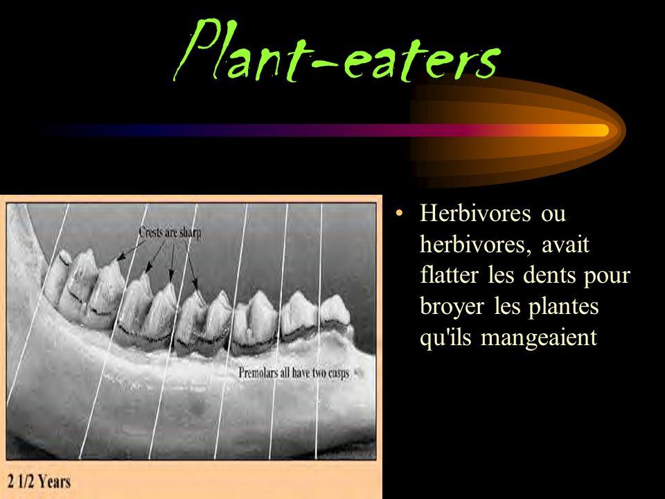 Meat-eaters Les mangeurs de viande ou carnivores, avait des dents tranchantes et pointues à mordre et à déchirer la viande.