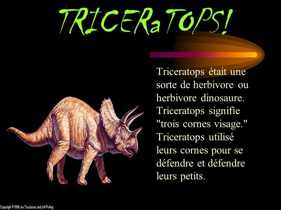 TRICERaTOPS.Triceratops était une sorte de herbivore ou herbivore dinosaure.