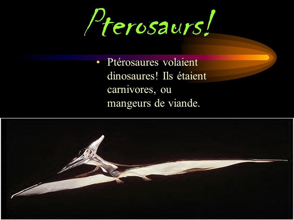 TRICERaTOPS! Triceratops était une sorte de herbivore ou herbivore dinosaure. Triceratops signifie