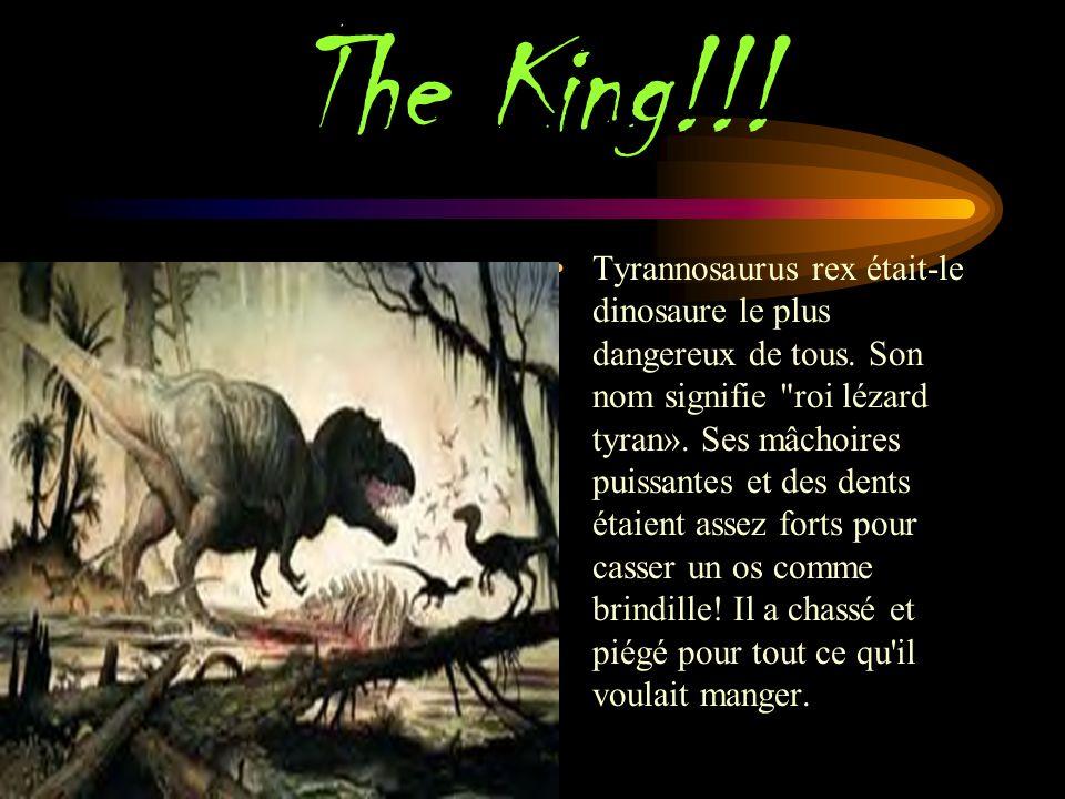 The King!!.Tyrannosaurus rex était-le dinosaure le plus dangereux de tous.