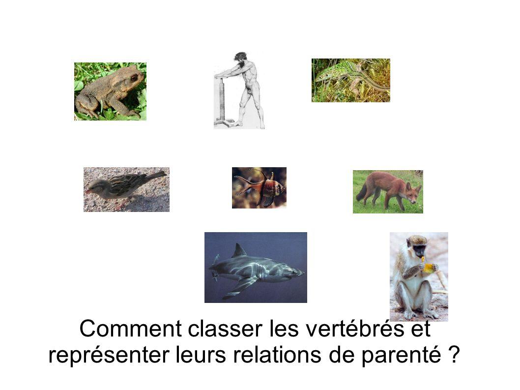 Comment classer les vertébrés et représenter leurs relations de parenté ?