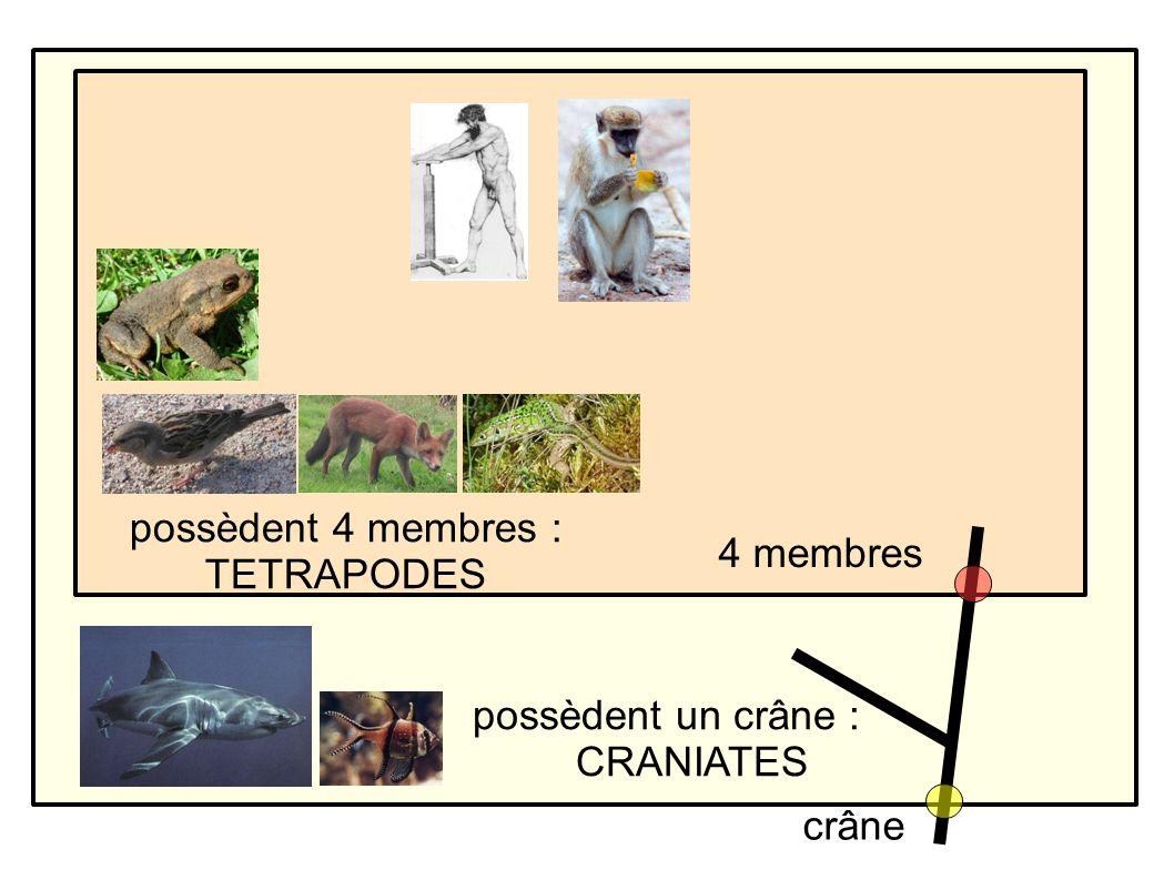 possèdent un crâne : CRANIATES possèdent 4 membres : TETRAPODES crâne 4 membres