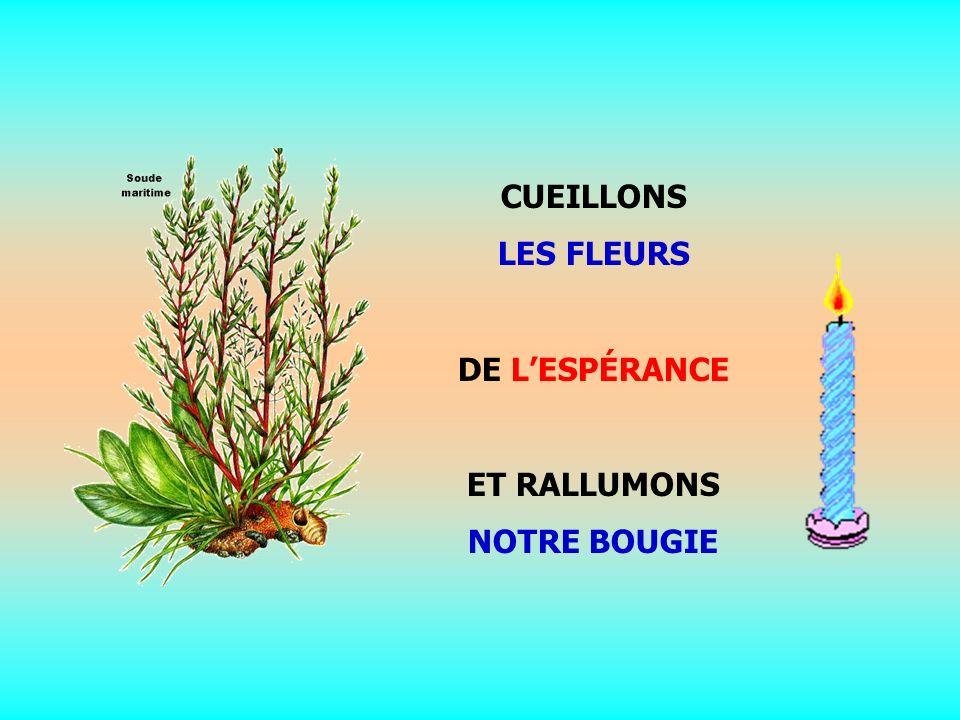 .. CUEILLONS LES FLEURS DE LESPÉRANCE ET RALLUMONS NOTRE BOUGIE