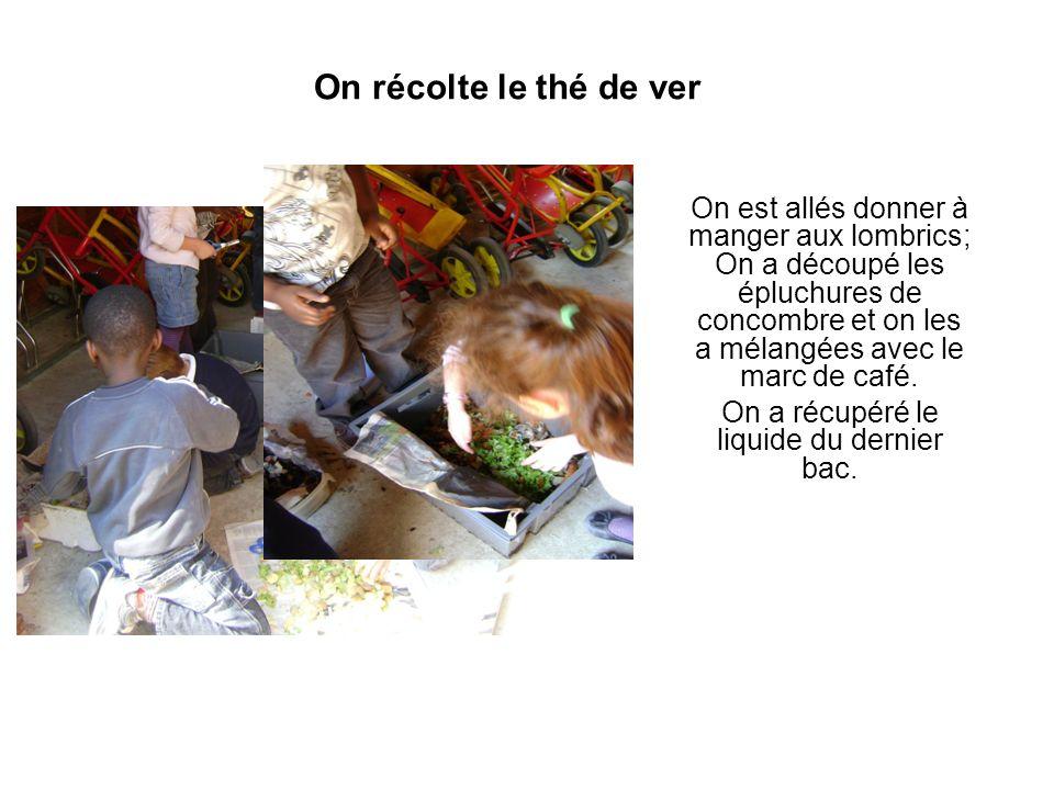 On récolte le thé de ver On est allés donner à manger aux lombrics; On a découpé les épluchures de concombre et on les a mélangées avec le marc de caf