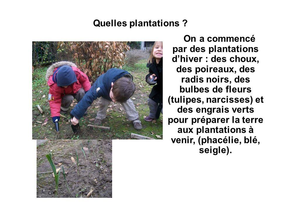 Quelles plantations ? On a commencé par des plantations dhiver : des choux, des poireaux, des radis noirs, des bulbes de fleurs (tulipes, narcisses) e