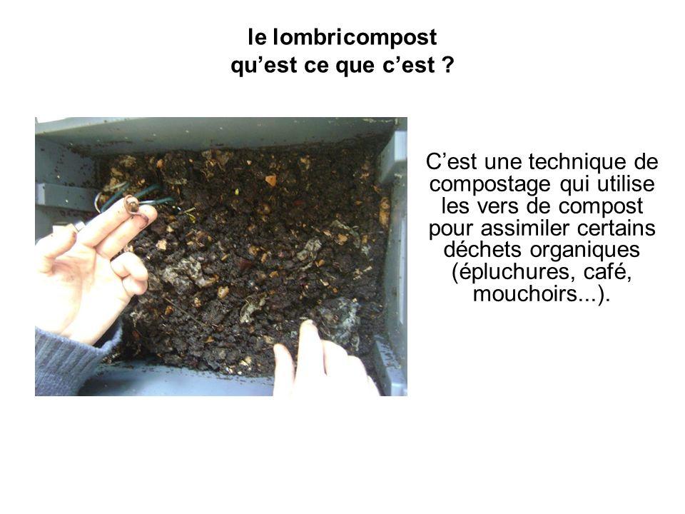 le lombricompost quest ce que cest ? Cest une technique de compostage qui utilise les vers de compost pour assimiler certains déchets organiques (éplu