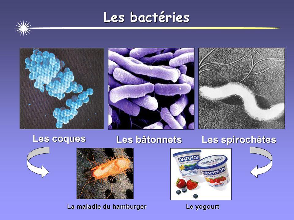 Les levures Saccharomyces cerevisiae La bière Le muguet
