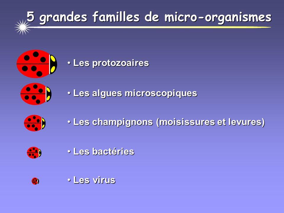 5 grandes familles de micro-organismes Les protozoaires Les protozoaires Les algues microscopiques Les algues microscopiques Les champignons (moisissures et levures) Les champignons (moisissures et levures) Les bactéries Les bactéries Les virus Les virus