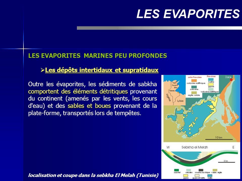 LES EVAPORITES MARINES PEU PROFONDES Les dépôts intertidaux et supratidaux Les dépôts intertidaux et supratidaux LES EVAPORITES comportent des élément