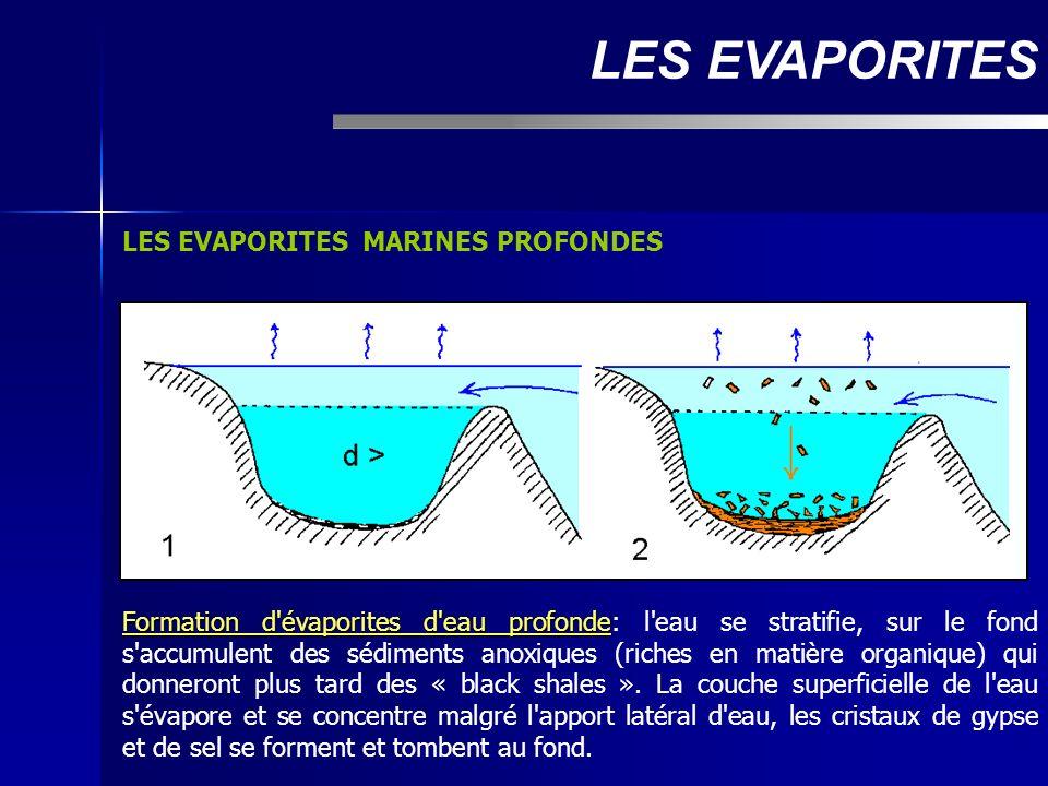 LES EVAPORITES MARINES PROFONDES LES EVAPORITES Formation d'évaporites d'eau profonde Formation d'évaporites d'eau profonde: l'eau se stratifie, sur l