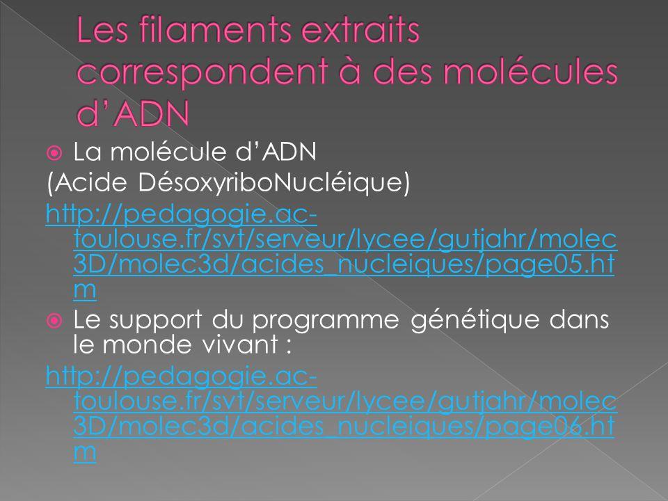 La molécule dADN (Acide DésoxyriboNucléique) http://pedagogie.ac- toulouse.fr/svt/serveur/lycee/gutjahr/molec 3D/molec3d/acides_nucleiques/page05.ht m