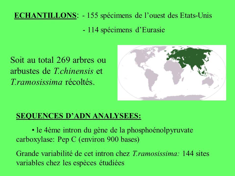 ECHANTILLONS : - 155 spécimens de louest des Etats-Unis - 114 spécimens dEurasie Soit au total 269 arbres ou arbustes de T.chinensis et T.ramosissima récoltés.