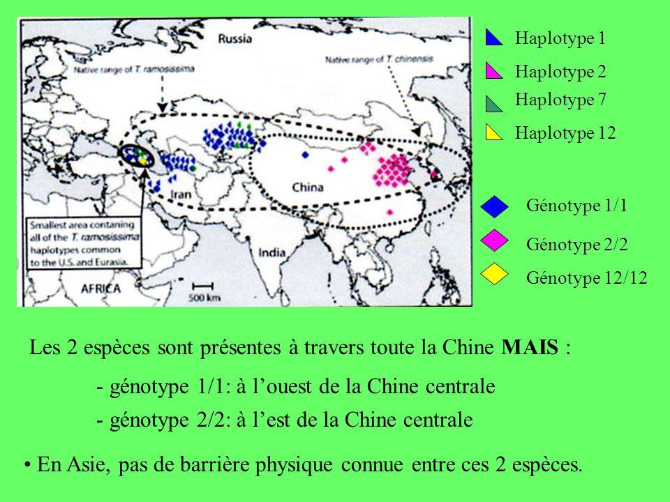 Haplotype 1 Haplotype 2 Haplotype 7 Haplotype 12 Génotype 1/1 Génotype 2/2 Génotype 12/12 Les 2 espèces sont présentes à travers toute la Chine MAIS : - génotype 1/1: à louest de la Chine centrale - génotype 2/2: à lest de la Chine centrale En Asie, pas de barrière physique connue entre ces 2 espèces.