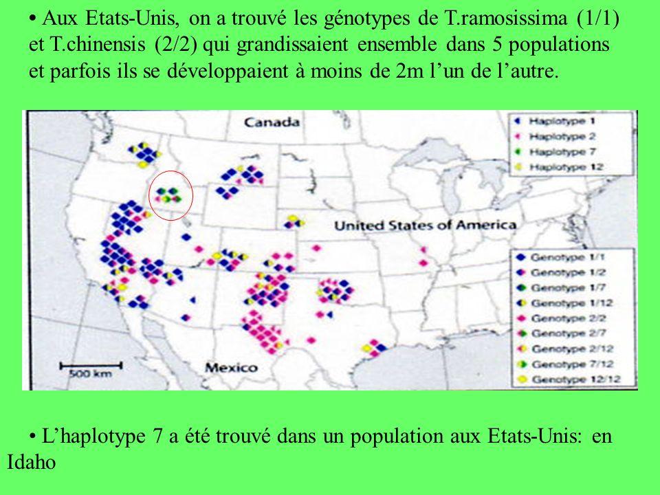 Lhaplotype 7 a été trouvé dans un population aux Etats-Unis: en Idaho Aux Etats-Unis, on a trouvé les génotypes de T.ramosissima (1/1) et T.chinensis