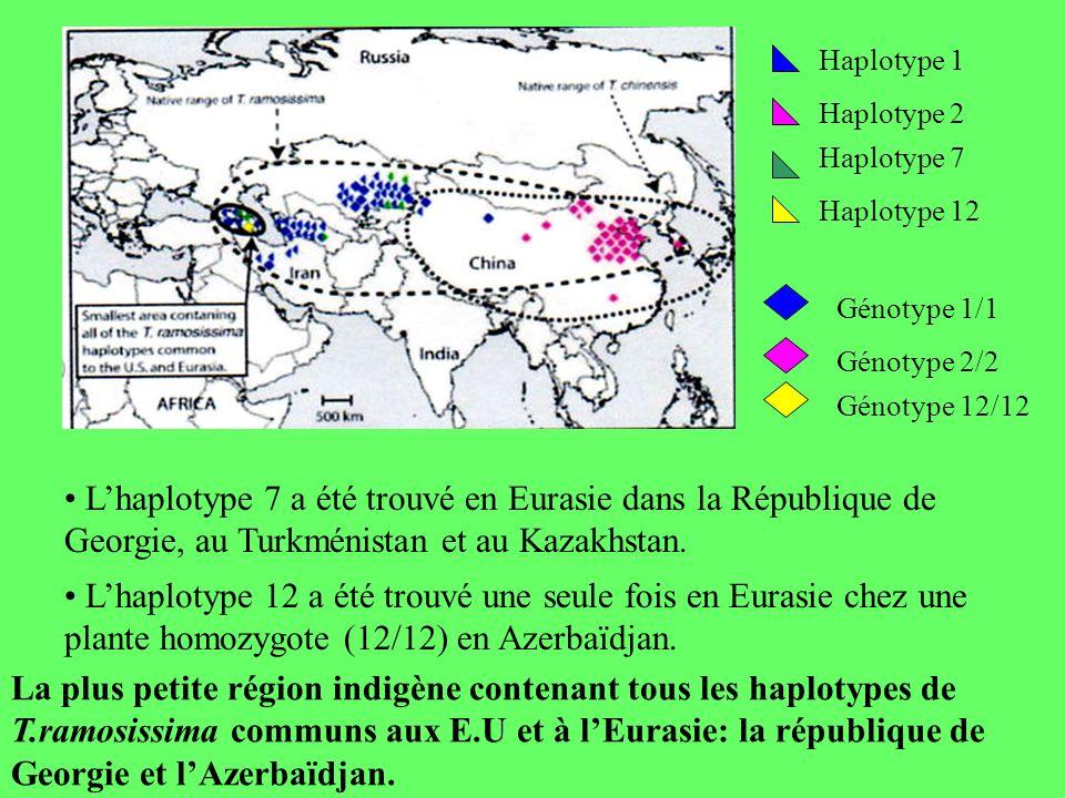 Haplotype 1 Haplotype 2 Haplotype 7 Haplotype 12 Génotype 1/1 Génotype 2/2 Génotype 12/12 Lhaplotype 12 a été trouvé une seule fois en Eurasie chez une plante homozygote (12/12) en Azerbaïdjan.