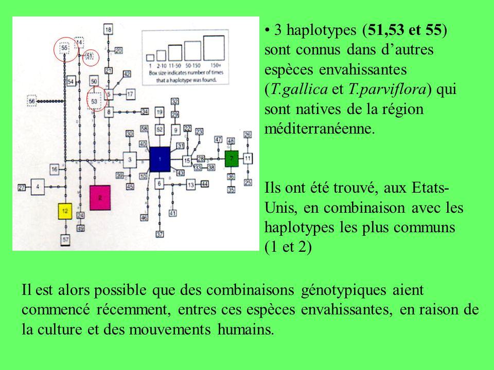 3 haplotypes (51,53 et 55) sont connus dans dautres espèces envahissantes (T.gallica et T.parviflora) qui sont natives de la région méditerranéenne. I