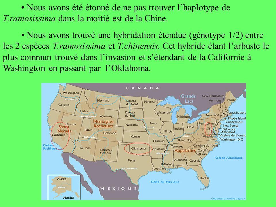 Nous avons été étonné de ne pas trouver lhaplotype de T.ramosissima dans la moitié est de la Chine.