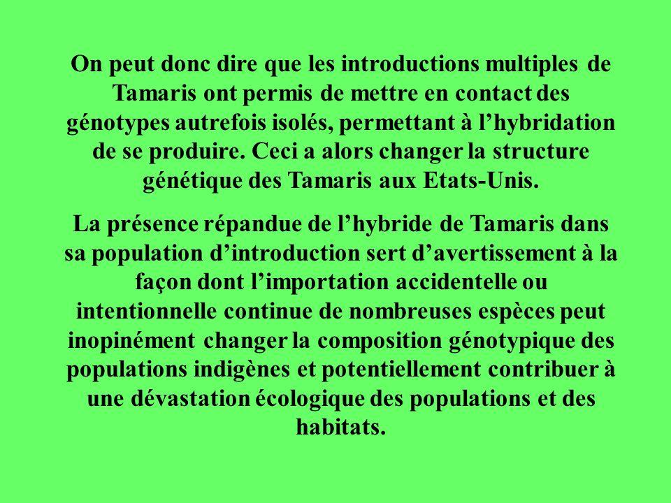 On peut donc dire que les introductions multiples de Tamaris ont permis de mettre en contact des génotypes autrefois isolés, permettant à lhybridation de se produire.