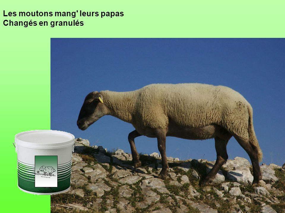 Les moutons mang leurs papas Changés en granulés