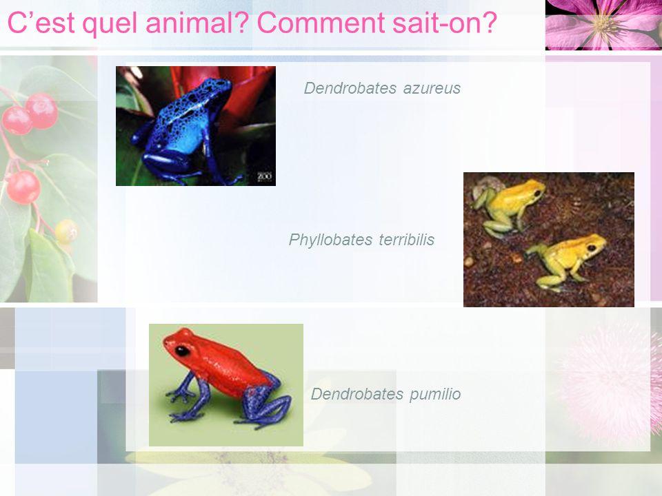 Cest quel animal? Comment sait-on? Dendrobates azureus Phyllobates terribilis Dendrobates pumilio