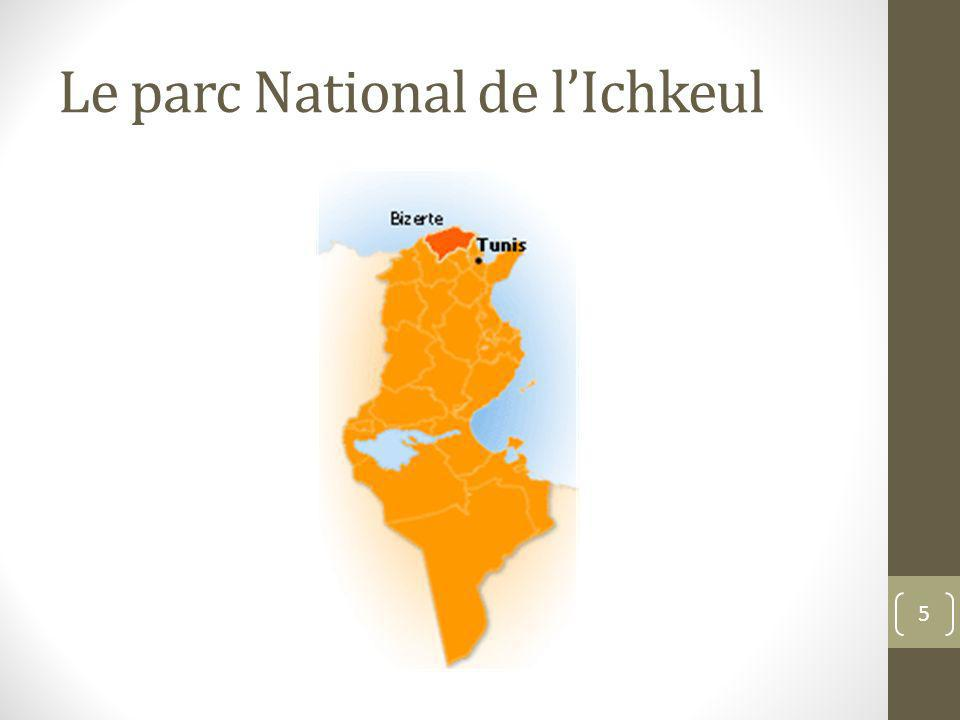 Le parc National de lIchkeul 5