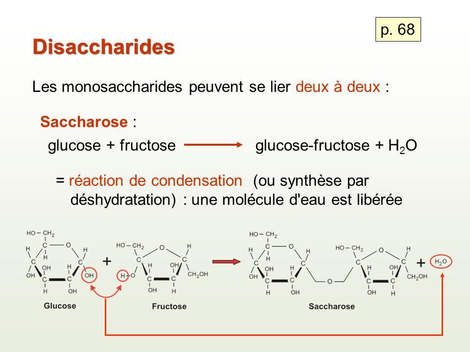 Disaccharides Les monosaccharides peuvent se lier deux à deux : Saccharose : glucose + fructoseglucose-fructose + H 2 O = réaction de condensation (ou synthèse par déshydratation) : une molécule d eau est libérée p.