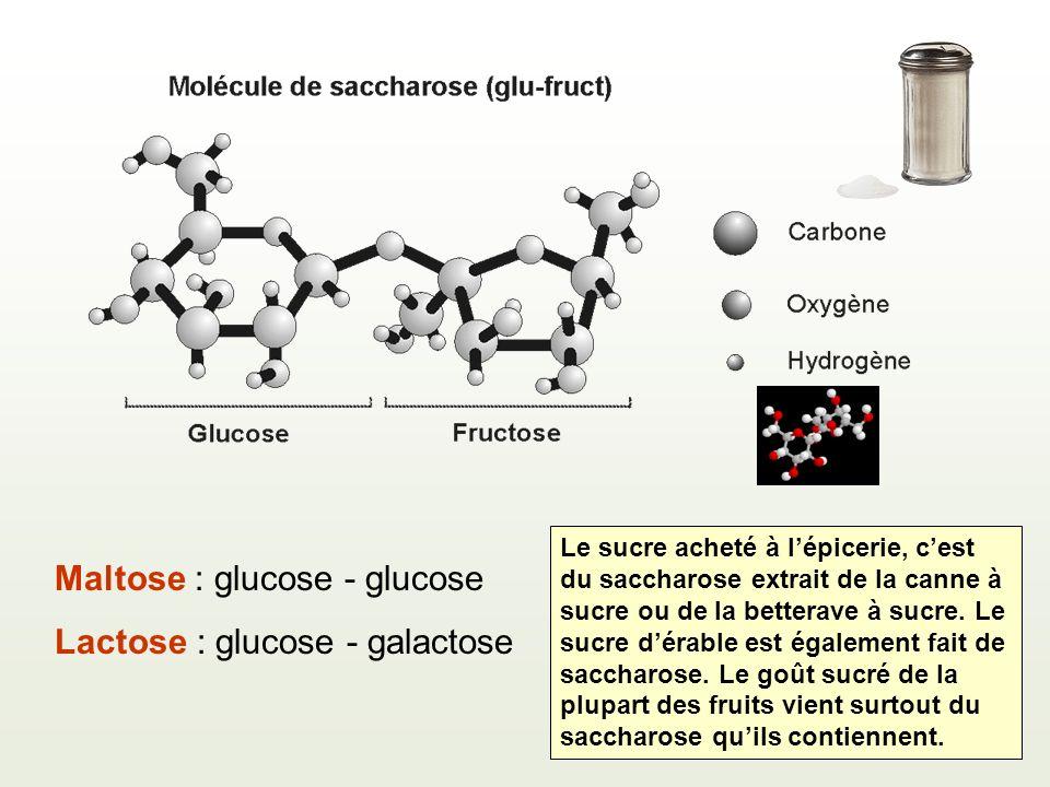 Maltose : glucose - glucose Lactose : glucose - galactose Le sucre acheté à lépicerie, cest du saccharose extrait de la canne à sucre ou de la betterave à sucre.