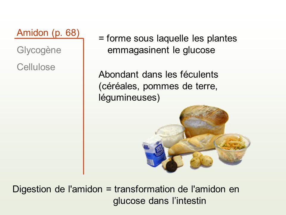 Amidon (p. 68) Glycogène Cellulose = forme sous laquelle les plantes emmagasinent le glucose Abondant dans les féculents (céréales, pommes de terre, l