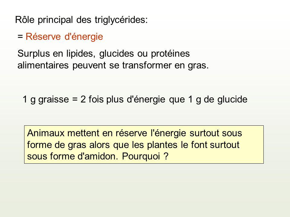 Rôle principal des triglycérides: = Réserve d énergie 1 g graisse = 2 fois plus d énergie que 1 g de glucide Surplus en lipides, glucides ou protéines alimentaires peuvent se transformer en gras.