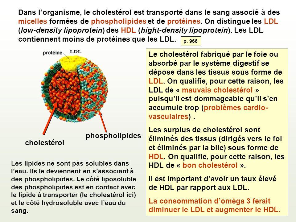 Dans lorganisme, le cholestérol est transporté dans le sang associé à des micelles formées de phospholipides et de protéines. On distingue les LDL (lo