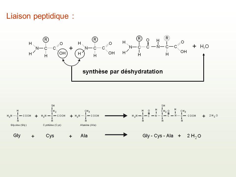 Liaison peptidique : synthèse par déshydratation
