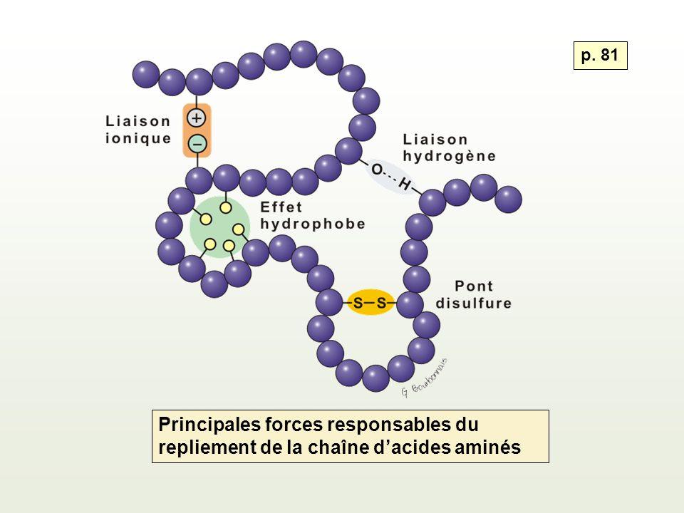 Principales forces responsables du repliement de la chaîne dacides aminés p. 81
