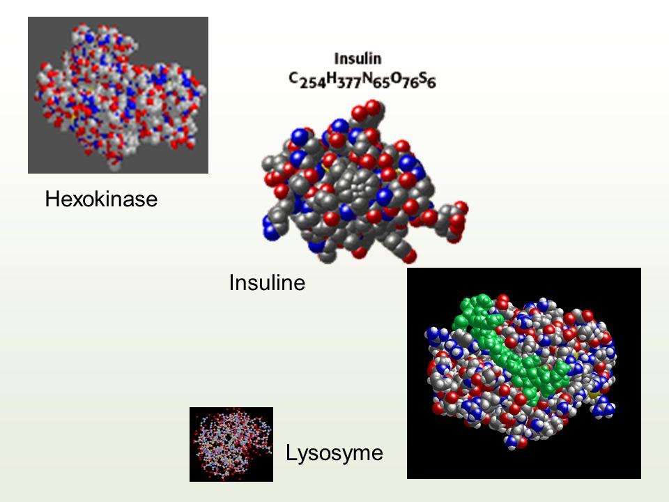 Lysosyme Insuline Hexokinase