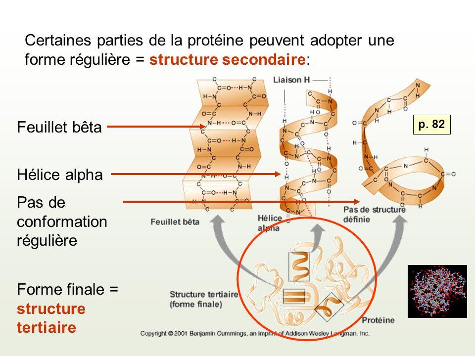 Certaines parties de la protéine peuvent adopter une forme régulière = structure secondaire: Feuillet bêta Hélice alpha Pas de conformation régulière