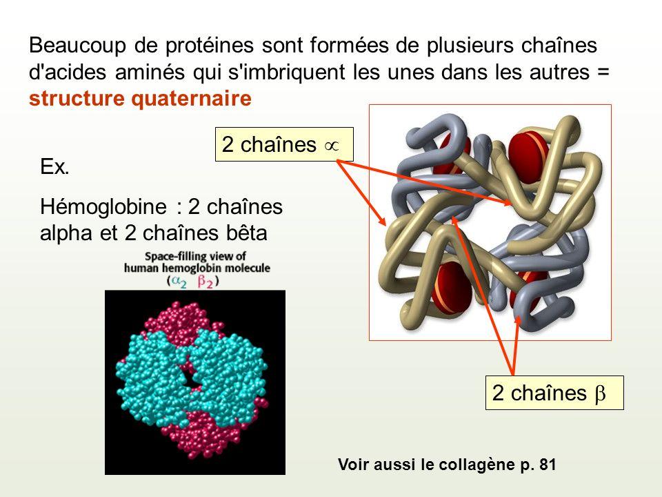 Beaucoup de protéines sont formées de plusieurs chaînes d acides aminés qui s imbriquent les unes dans les autres = structure quaternaire Ex.