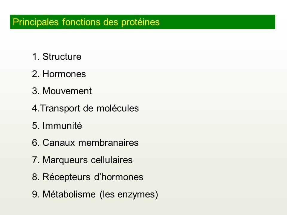 Principales fonctions des protéines 1. Structure 2. Hormones 3. Mouvement 4.Transport de molécules 5. Immunité 6. Canaux membranaires 7. Marqueurs cel