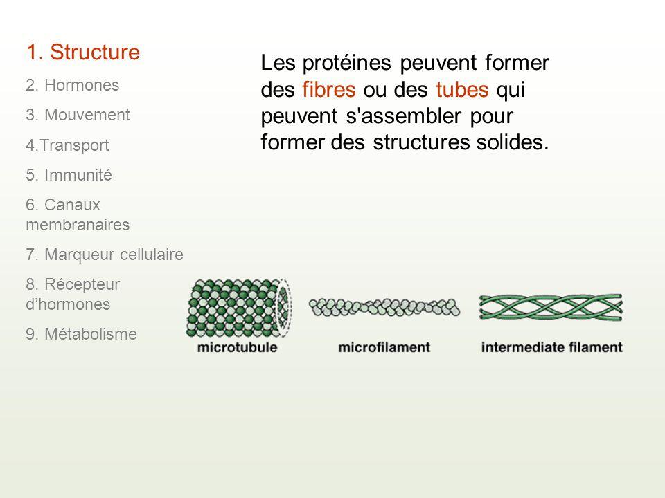 Les protéines peuvent former des fibres ou des tubes qui peuvent s'assembler pour former des structures solides. 1. Structure 2. Hormones 3. Mouvement