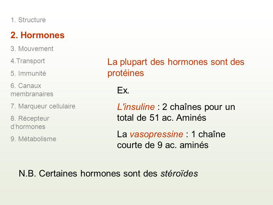 La plupart des hormones sont des protéines Ex.L insuline : 2 chaînes pour un total de 51 ac.