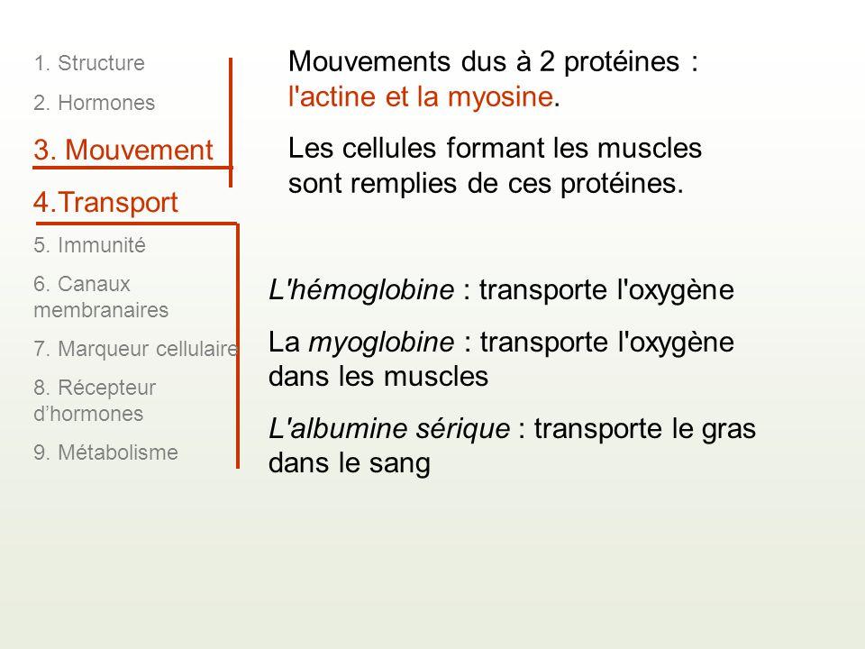 Mouvements dus à 2 protéines : l'actine et la myosine. Les cellules formant les muscles sont remplies de ces protéines. L'hémoglobine : transporte l'o