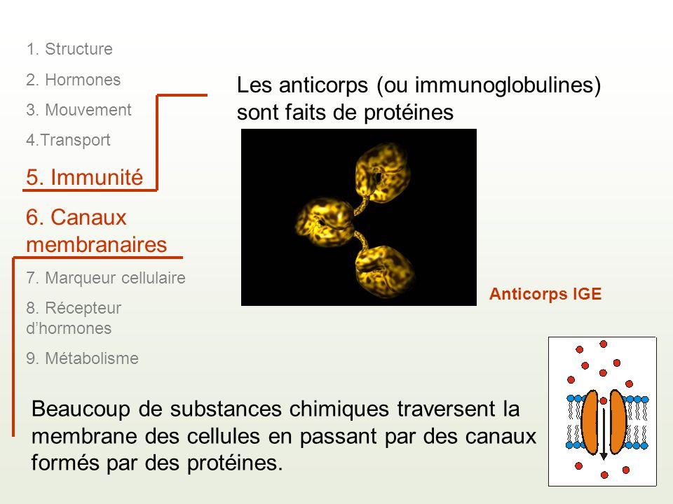 Les anticorps (ou immunoglobulines) sont faits de protéines Anticorps IGE 1. Structure 2. Hormones 3. Mouvement 4.Transport 5. Immunité 6. Canaux memb
