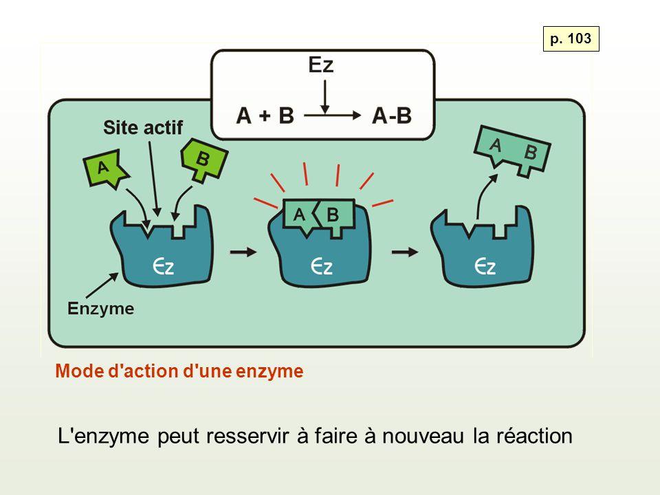 Mode d'action d'une enzyme L'enzyme peut resservir à faire à nouveau la réaction p. 103