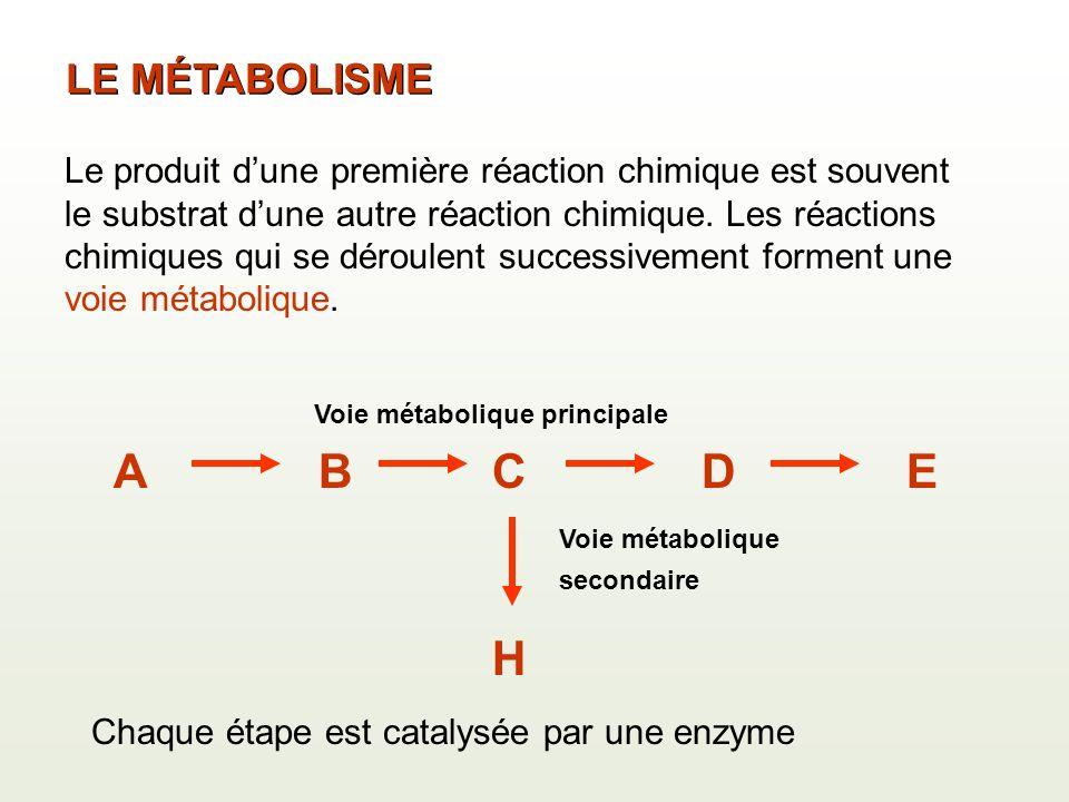 ABCDE Voie métabolique principale H Voie métabolique secondaire Le produit dune première réaction chimique est souvent le substrat dune autre réaction