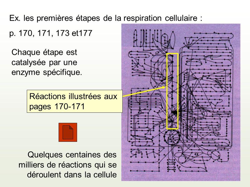 Quelques centaines des milliers de réactions qui se déroulent dans la cellule Ex. les premières étapes de la respiration cellulaire : p. 170, 171, 173