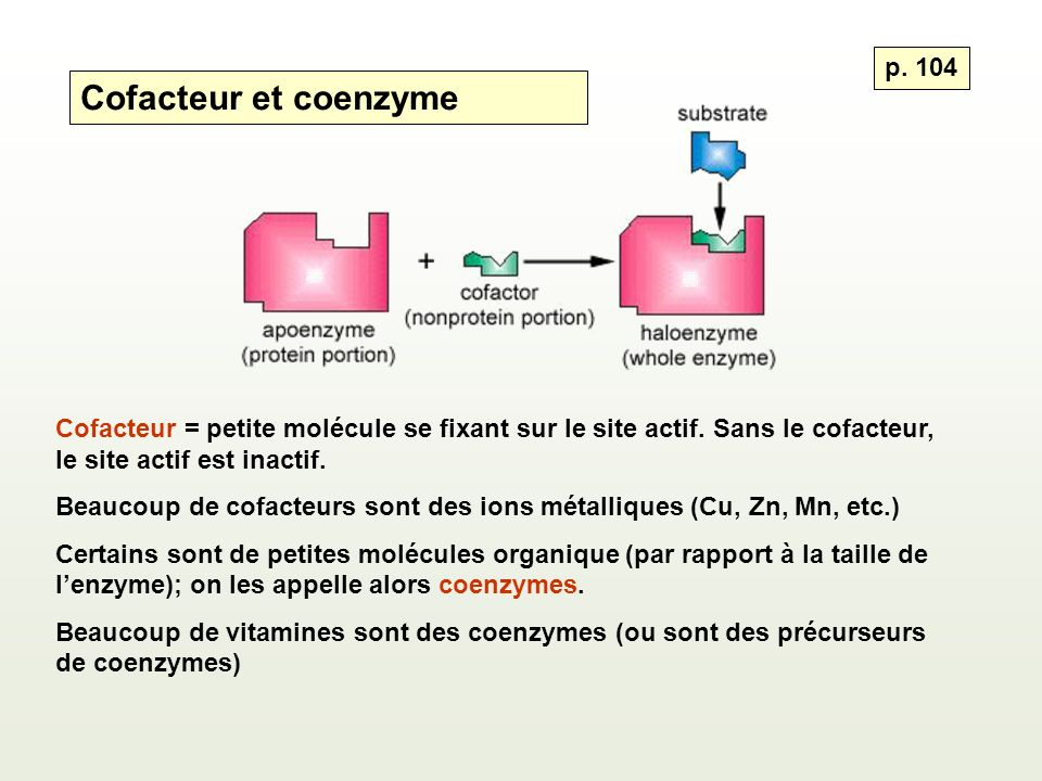 Cofacteur et coenzyme p. 104 Cofacteur = petite molécule se fixant sur le site actif. Sans le cofacteur, le site actif est inactif. Beaucoup de cofact