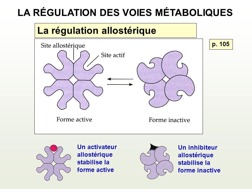 La régulation allostérique Un activateur allostérique stabilise la forme active Un inhibiteur allostérique stabilise la forme inactive LA RÉGULATION DES VOIES MÉTABOLIQUES p.