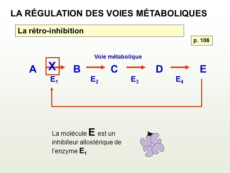 ABCDE Voie métabolique E1E1 E2E2 E3E3 E4E4 La molécule E est un inhibiteur allostérique de lenzyme E 1 X p. 106 LA RÉGULATION DES VOIES MÉTABOLIQUES L