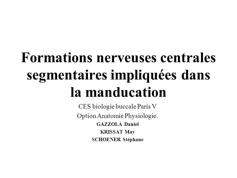 Formations nerveuses centrales segmentaires impliquées dans la manducation CES biologie buccale Paris V Option Anatomie Physiologie. GAZZOLA Daniel KR