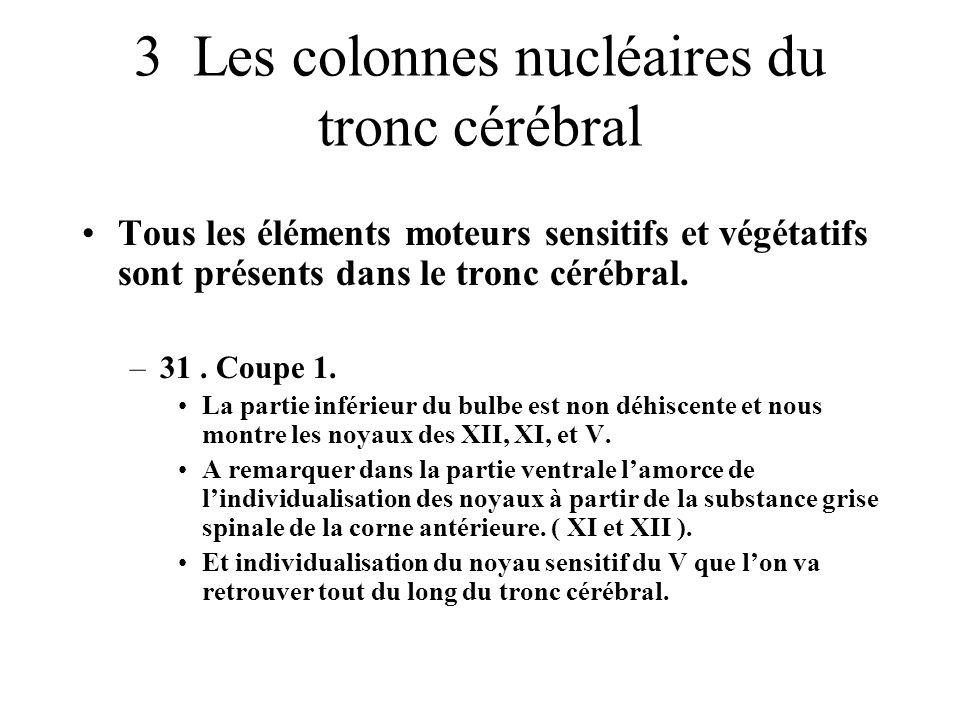 3 Les colonnes nucléaires du tronc cérébral Tous les éléments moteurs sensitifs et végétatifs sont présents dans le tronc cérébral. –31. Coupe 1. La p
